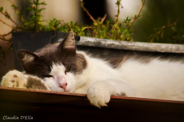 Fotografia de gato 619x409 Fotografando Pets