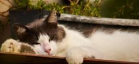 Fotografia-de-gato-619x409