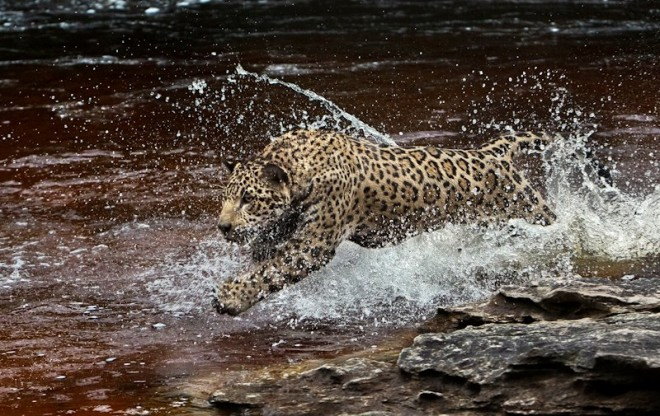 Araquém Alcântara - O Pulo do Jaguaretê