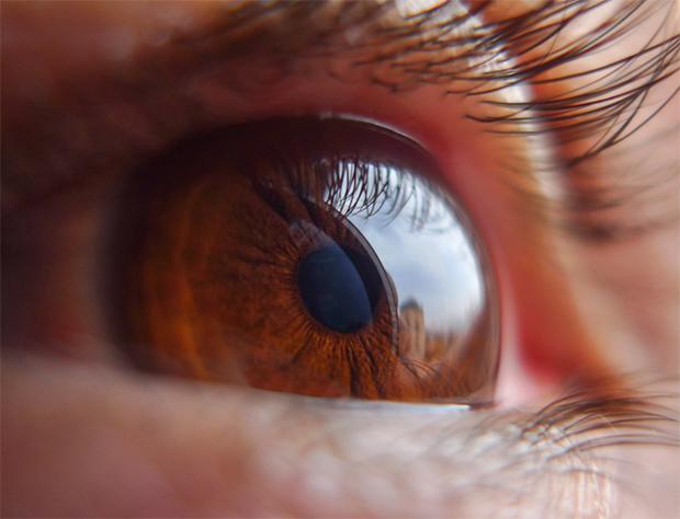 Olho em macro - (c) Eduardo Mendonça