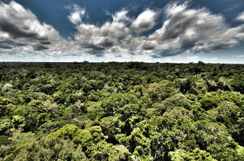 Figura 2: Trecho de floresta amazônica fotografado a partir de torre de observação, com 45m de altitude, localizada na área do parque do Museu da Amazônia (MUSA) – Manaus/AM.