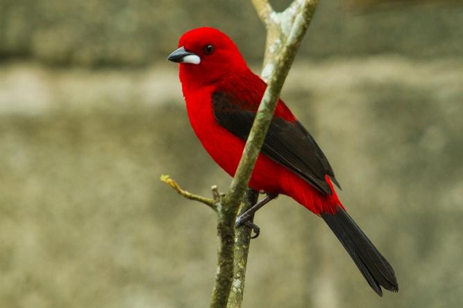 fotografar pássaros