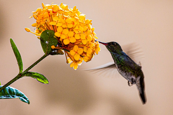 fotografia pássaros